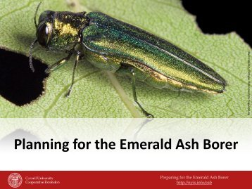 Planning for the Emerald Ash Borer - New York Invasive Species ...