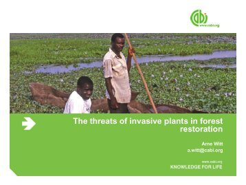 The threats of invasive plants in forest restoration - total raffinage ...