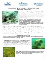 Common Coral Species of Southwest Florida - Pinellas County ...