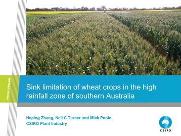 Sink limitation of wheat crops in the high rainfall zone of southern ...
