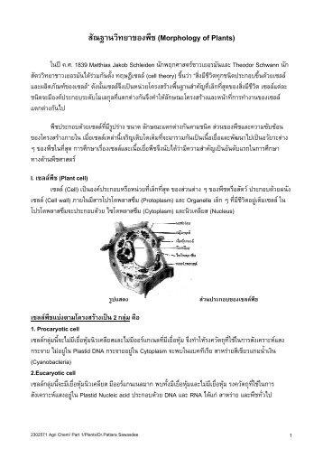 สัณฐานวิทยาของพืช (Morphology of Plants) - ภาค วิชา เคมี