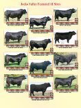 Jocko Valley cattle - Angus Journal - Page 2