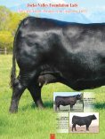 Jocko Valley cattle - Angus Journal - Page 4