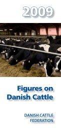 Figures on Danish Cattle - LandbrugsInfo