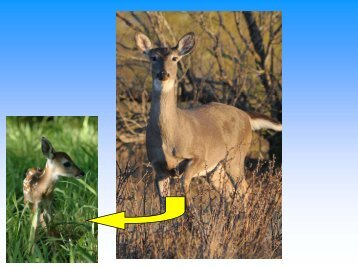 Overwinter Fawn Mortality: Out of Sight