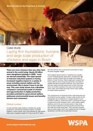 Humane egg and chicken production in Brazil - WSPA