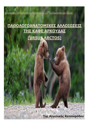 παθολογοανατομικες αλλοιωσεις της καφε αρκουδας ... - Καλλιστώ