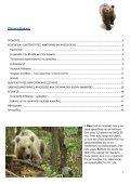 παθολογοανατομικες αλλοιωσεις της καφε αρκουδας ... - Καλλιστώ - Page 2
