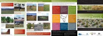 Serrated Tussock - Weeds Australia