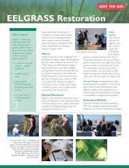 EELGRASS Restoration