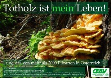 STECKBRIEF: Schwefelporling (Laetiporus sulphureus)