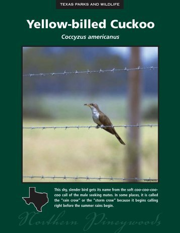 Yellow-billed Cuckoo - The State of Water
