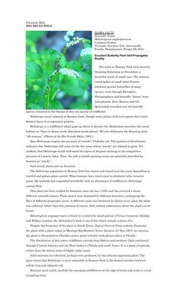 """Heliotropium angiospermum - Christina Mild's """"Rio Delta Wild"""""""