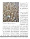 robbins' cinquefoil - Native Plant Network - Page 6