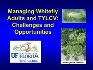 Managing Whitefly Adults and TYLCV - Florida Ag Expo - University ...