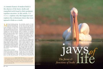 The forms & functions of beaks