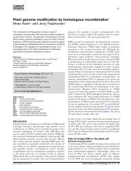 Plant genome modification by homologous recombination