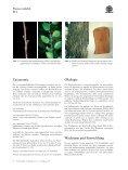 Prunus mahaleb - Seite 4