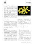Prunus mahaleb - Seite 5