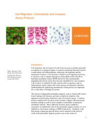 Cell Migration, Chemotaxis and Invasion Assay Protocol