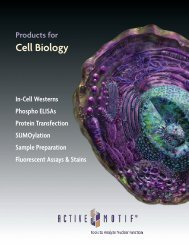 Products for Cell Biology - Active Motif