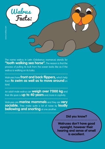 Walrus Facts: - Motlies