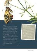 Kan vi lære af skvalderkål? - Pharmadanmark - Page 2