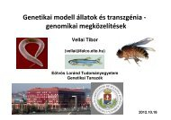 Genetikai modell állatok és transzgénia - genomikai megközelítések