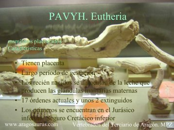 Eutheria: mamíferos placentados - Aragosaurus