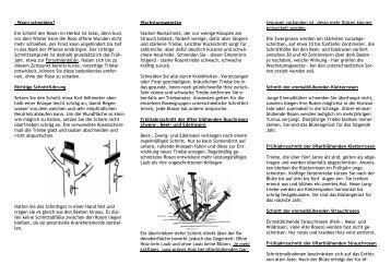 hortensien richtig pflanzen und pflegen gartenbaumschule. Black Bedroom Furniture Sets. Home Design Ideas