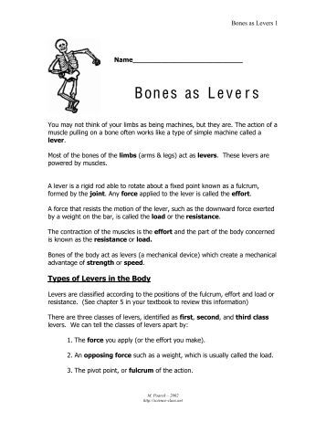 download bones as levers answer key full pdf book bill nye friction questions worksheets and. Black Bedroom Furniture Sets. Home Design Ideas