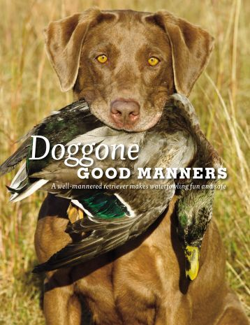 Waterfowl hunting, especially from a blind, is a wonderful