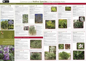 Common Local Native Species of the Adelaide Plains