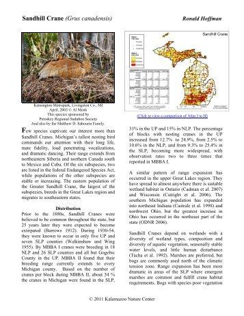 Sandhill Crane - Michigan Breeding Bird Atlas Website