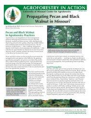 Propagating Pecan and Black Walnut - University of Missouri Center ...