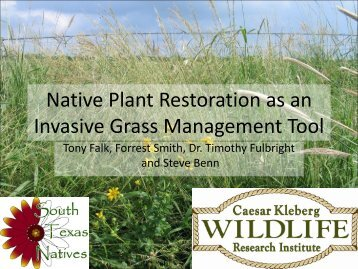 Native Plant Restoration as an Invasive Grass Management Tool