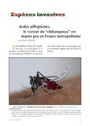 "Aedes albopictus, le vecteur du ""chikungunya"" - Apiservices"