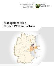 Managementplan für den Wolf in Sachsen
