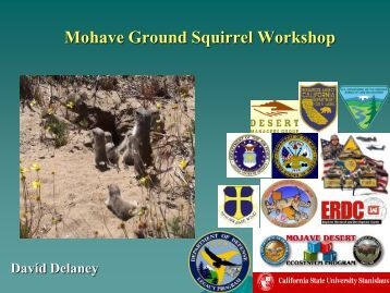 Mohave Ground Squirrel Workshop - Desert Managers Group