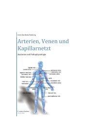Aufbau der Arterien, Venen und Mikrozirkulation