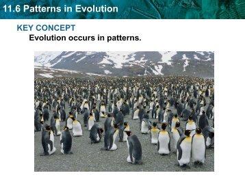 11.6 Patterns in Evolution