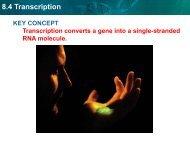 8.4 Transcription