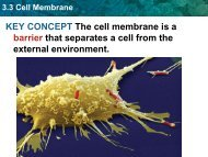3-3 Membranes 3-4 Transport PPT