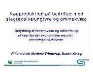 Kødproduktion på bedrifter med slagtekalve/ungtyre ... - LandbrugsInfo