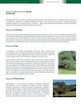 Forestal - Page 2