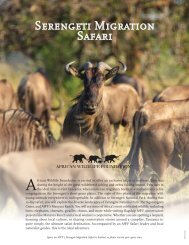 Serengeti Migration Safari - African Wildlife Foundation