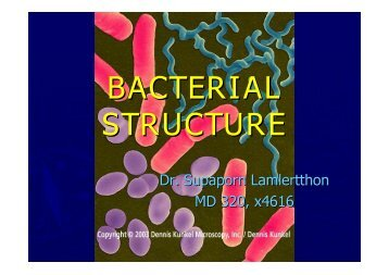 BACTERIAL STRUCTURE - ่www.meded.nu.ac.th