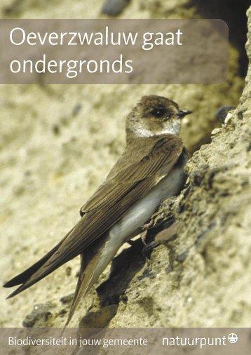 Oeverzwaluw gaat ondergronds - Natuurpunt