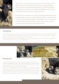 Oeverzwaluw gaat ondergronds - Natuurpunt - Page 2