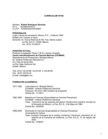 Contador Publico Curriculum Vitae